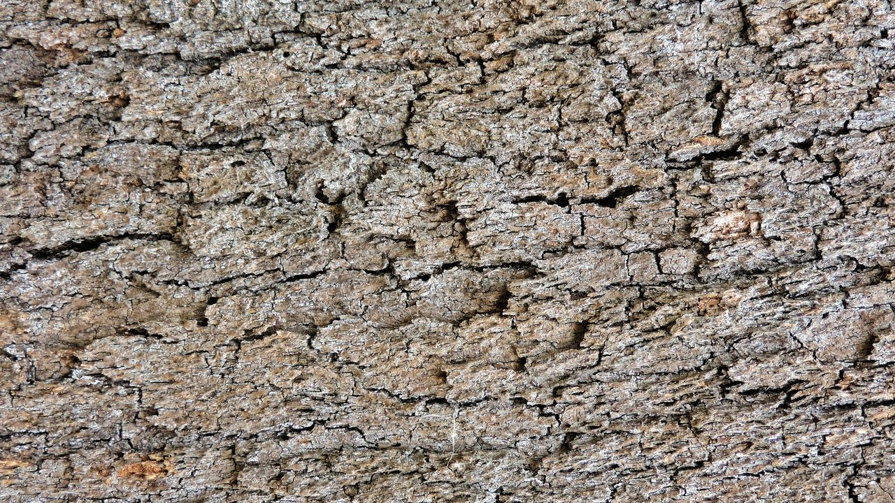 textured, dirty, close-up, nature, macro, stone material, backgrounds, gray, time, rough, built structure, bacterium, architecture, outdoors, no people, day