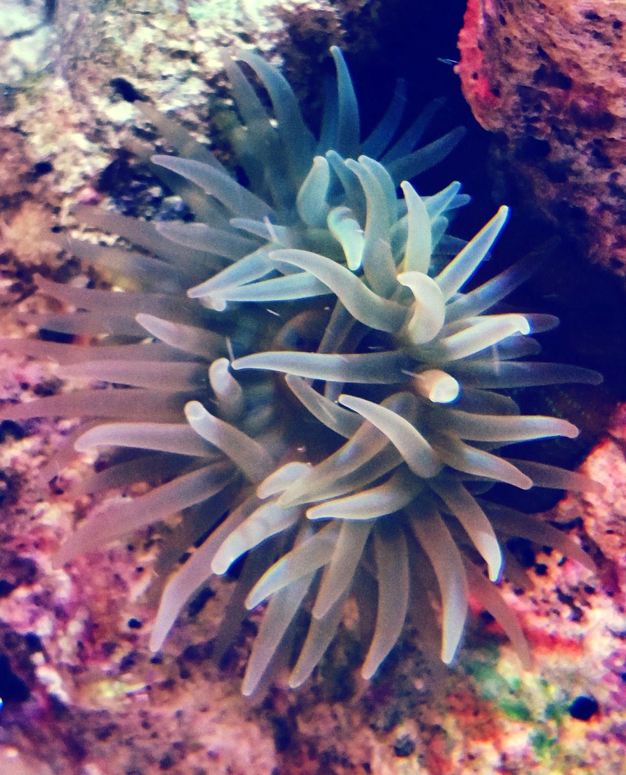 Anenome Sea Life Underwater UnderSea Sea Water Nature Anenomes Ecosystem  Close-up Coral Sealife Marine Marine Life Sea