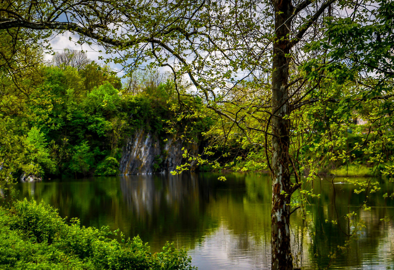 tree, water, reflection, lake, nature, beauty in nature, scenics, forest, outdoors, growth, green color, tranquil scene, waterfront, tranquility, no people, day