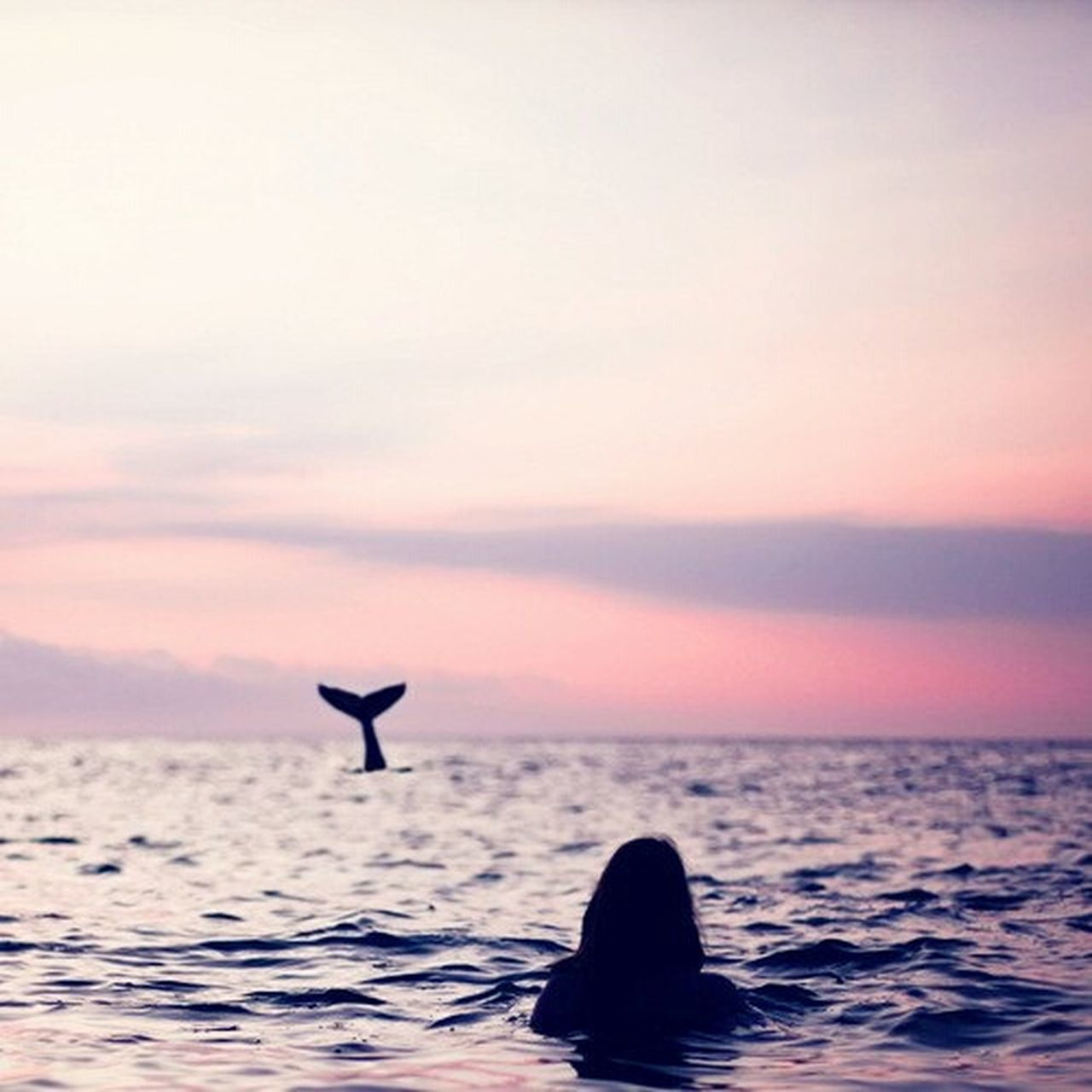 one animal, sea, sunset, animal themes, animals in the wild, animal wildlife, water, silhouette, animal, sea life, whale, horizon over water, animal fin, nature, swimming, beauty in nature, outdoors, aquatic mammal, humpback whale, scenics, mammal, no people, tail, sky, day
