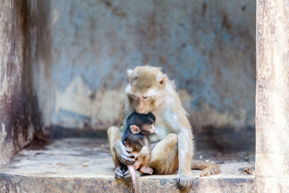 Beautiful stock photos of monkey, Animal Themes, Animal Wildlife, Animals In The Wild, Baby