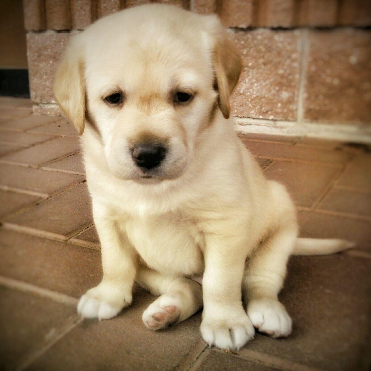 Puppy Love Puppy❤ Littedog Littlefriend♥ Lookatme Dreamer Pets