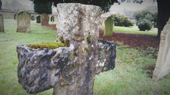 Graveyard Collection Lichen Moss Stone Cross Gravestone