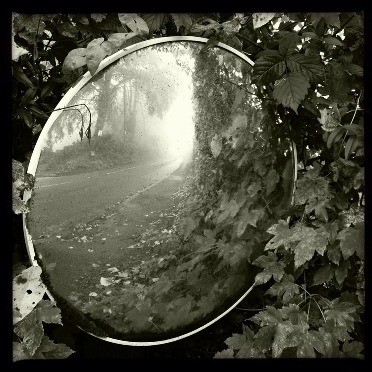 Reflections of a Foggy Day
