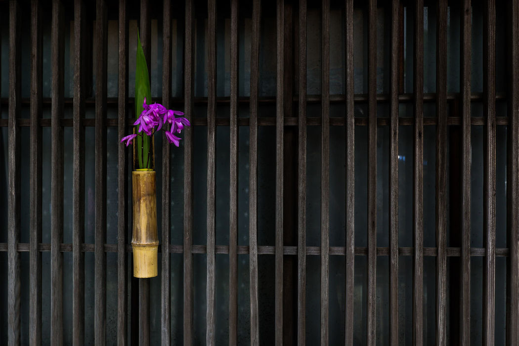 Shiran 紫蘭 Bamboo Bletilla Striata Decoration Flowers Japanese  Leaf Minimal Minimalism Nature Nature_collection Plant Purple Shiranui Simple Photography Simplicity Urn Orchid Violet Wood 生花 紫蘭 Ultimate Japan