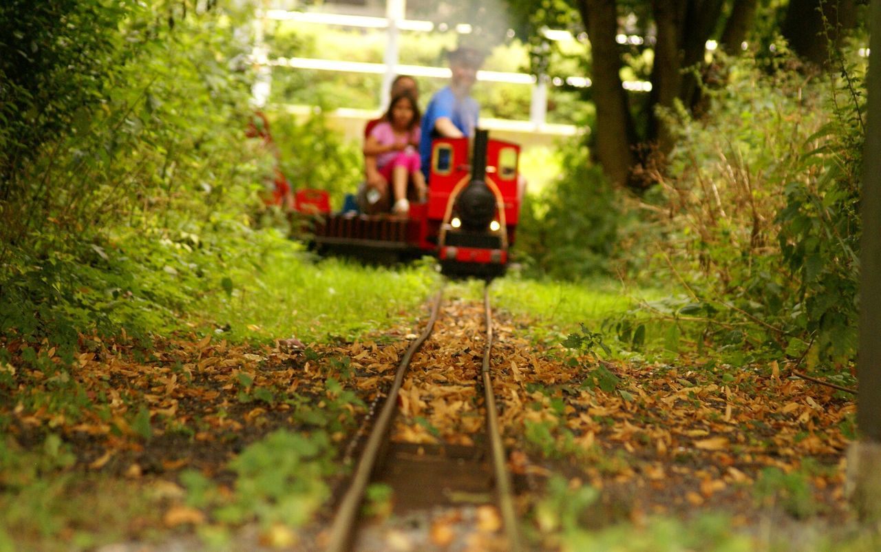transportation, real people, selective focus, mode of transport, two people, sitting, land vehicle, railroad track, rail transportation, tree, day, togetherness, childhood, outdoors, nature, grass
