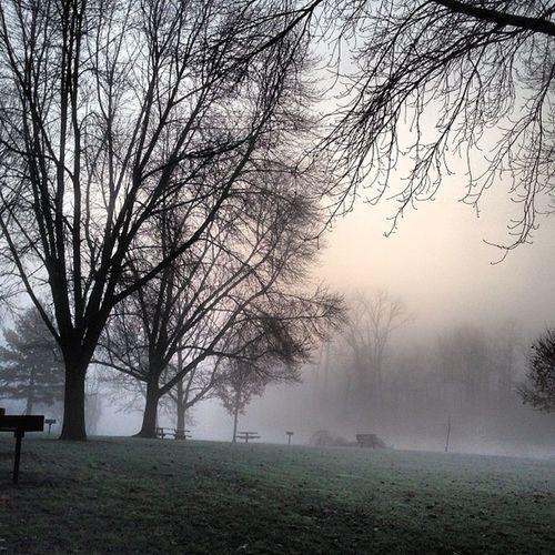 Frosty foggy