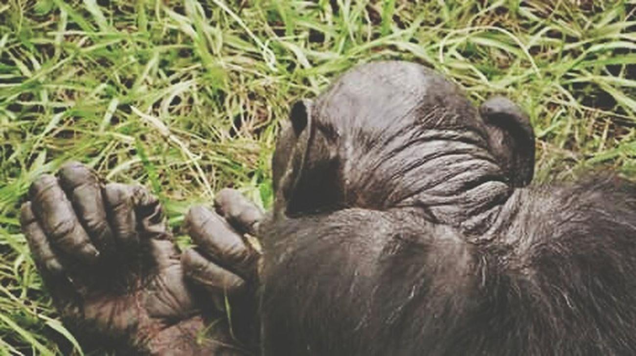 Jacksonville Zoo Apes Primates Monkeybusiness