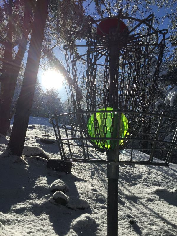 Discgolfbasket Discgolf Sunlight Low Angle View Tree Growth Sunlight No People Nature Outdoors Green Color Day Beauty In Nature Sky