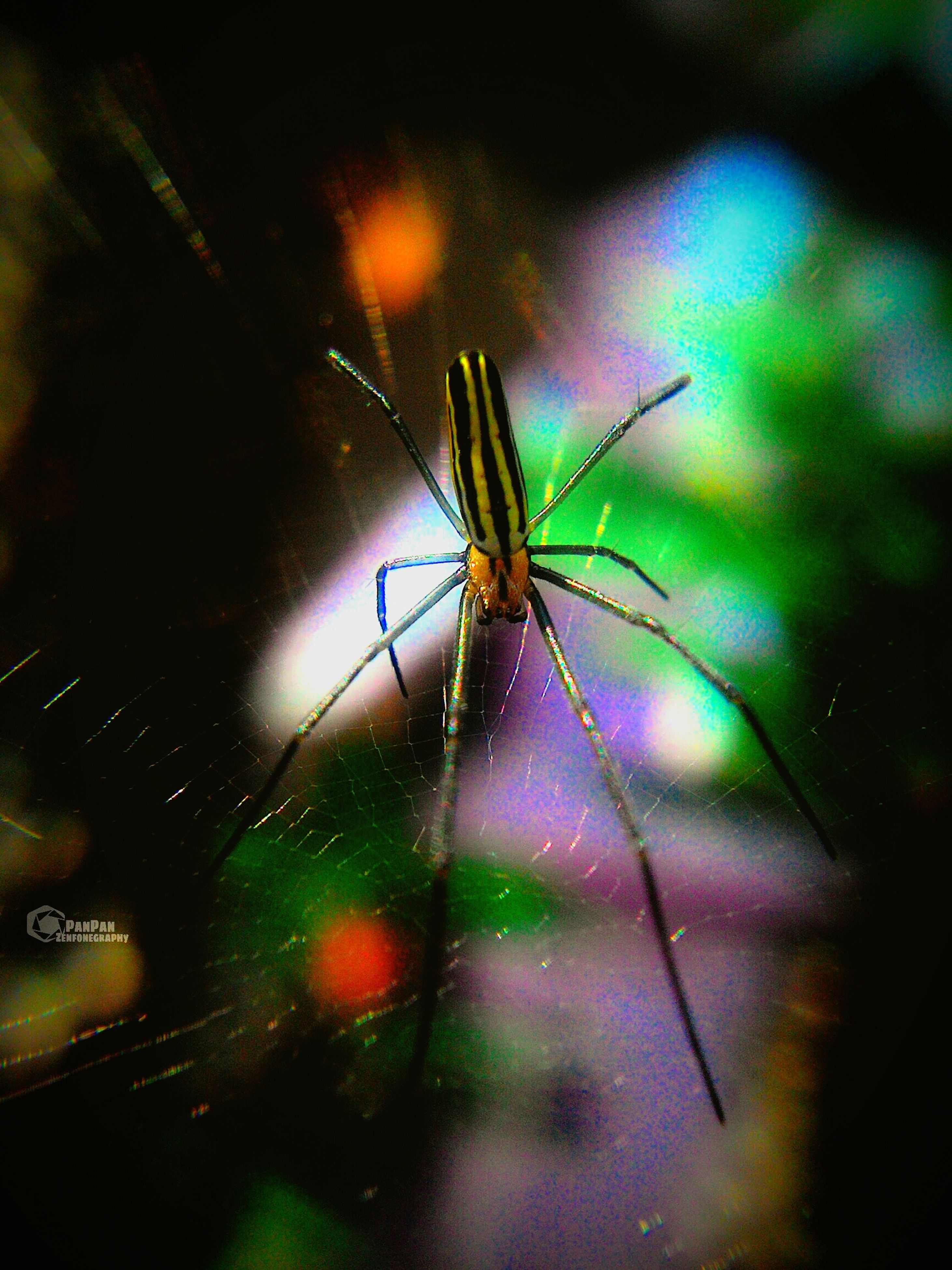 insect, one animal, animal themes, animals in the wild, spider web, wildlife, spider, focus on foreground, close-up, night, dragonfly, outdoors, selective focus, no people, spinning, nature, web, silhouette, full length