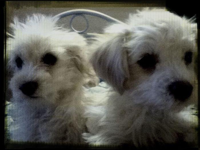 los kieros Tobi & Chufi