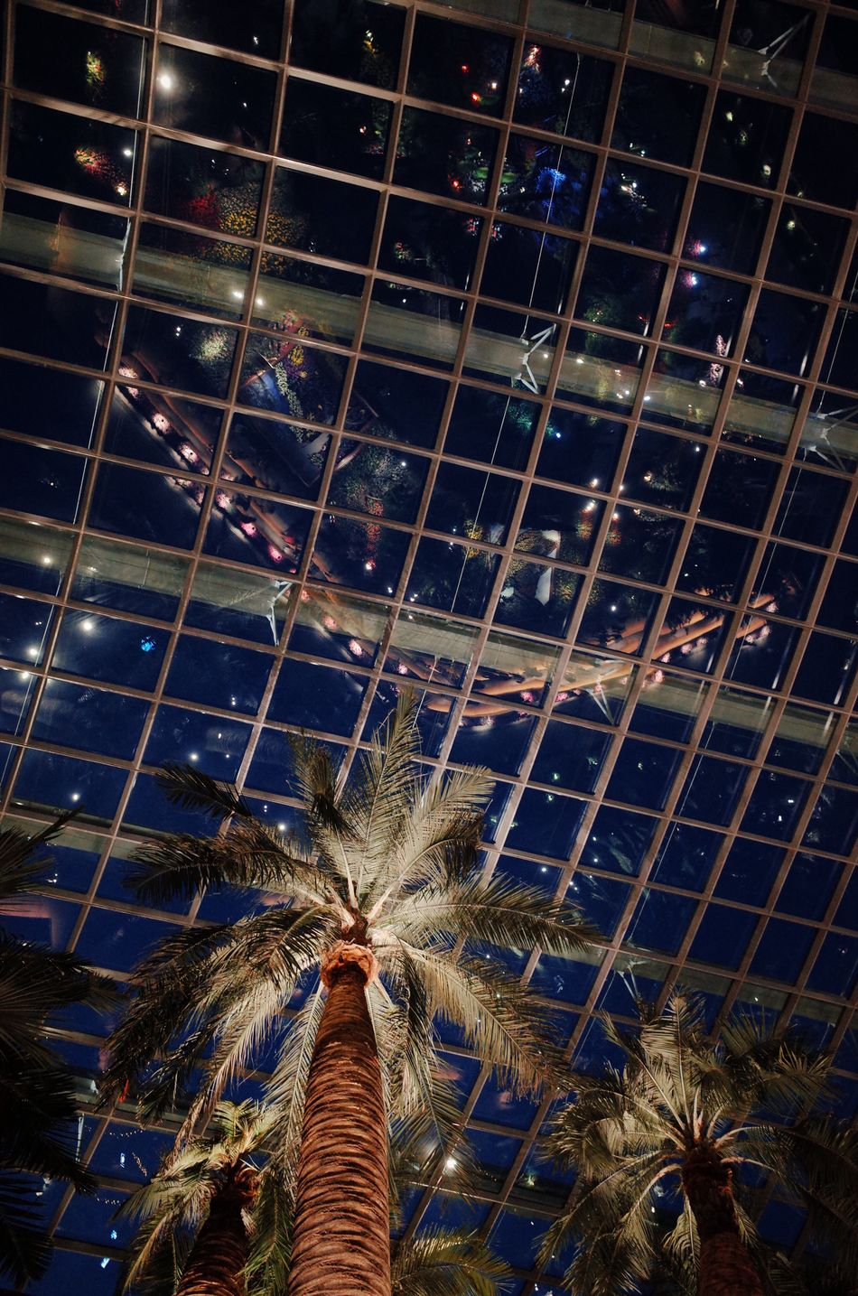 Flower Dome Low Angle View Starry Night Reflctions Coconut Palm Tree
