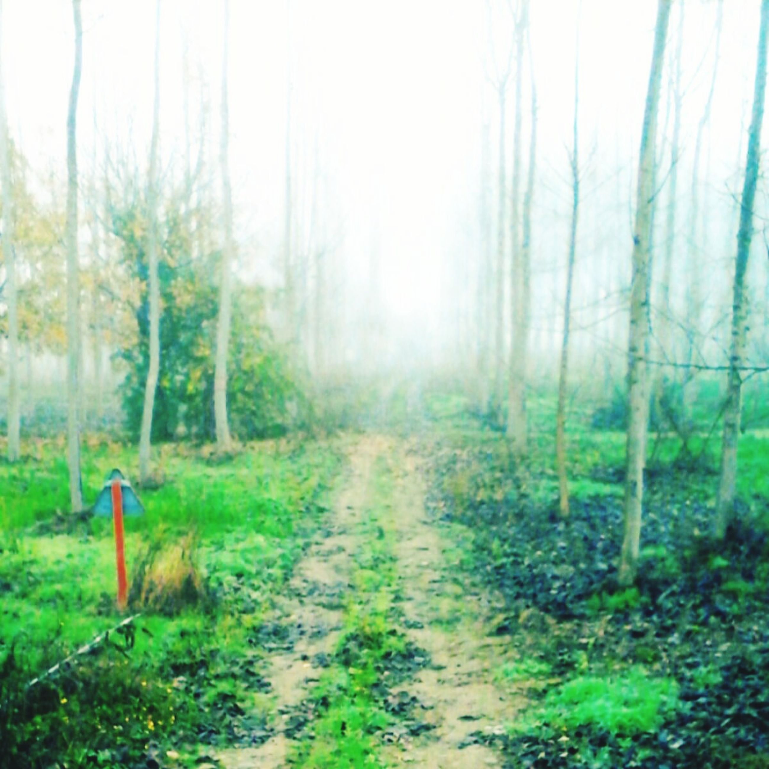 forest, no people, nature, day, tree, outdoors, grass, beauty in nature, sky