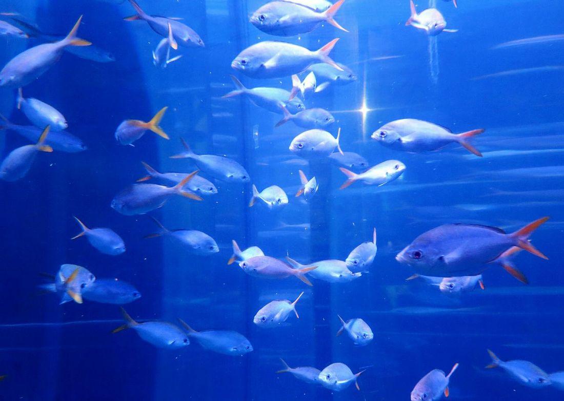 рыбки аквариум аквариумные рыбки подводный мир морская жизнь в море фауна живность животные фото животных Природа Fish Aquarium Aquarium Life Aquarium Fish Pets Animals Nature Sealife Underwater Fauna Animal Photography Nature