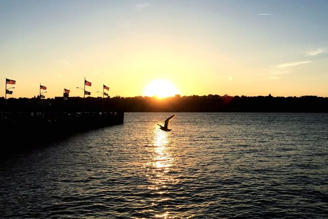 Happy Memorial Day Weekened! Sunset Seagull Hudson River Boat Ride Summer Weekend Moment