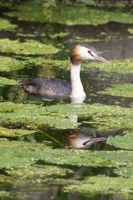 Water_collection EyeEm Birds EyeEm Best Shots - Nature EyeEm Best Shots - Reflections