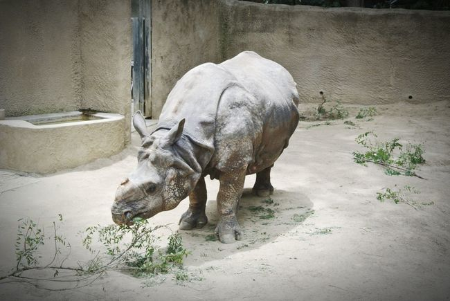 LA Zoo Rhino Animals Taking Photos Beautiful Sky Check This Out Enjoying Life
