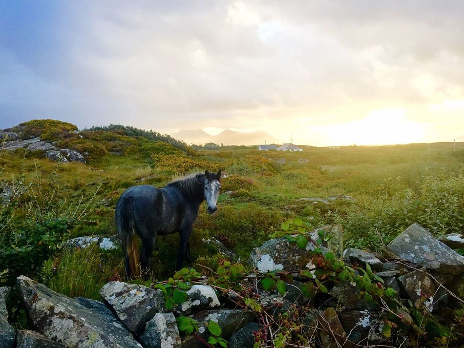 Beautiful stock photos of ireland, domestic animals, animal themes, rock - object, mammal