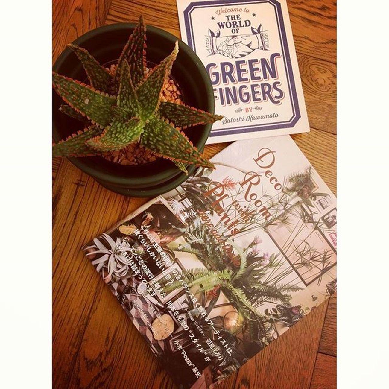 ついつい買っちゃうよね♫アロエフラミンゴと呼ぶみたい。。。 satieさんのでっかい個展atラフォーレミュージアム原宿❣ 植物のお買い物も出来るよ(⌒_⌒) 11/19−11/23おいでませ〜♡ Satie 川本諭 グリーンフィンガーズ