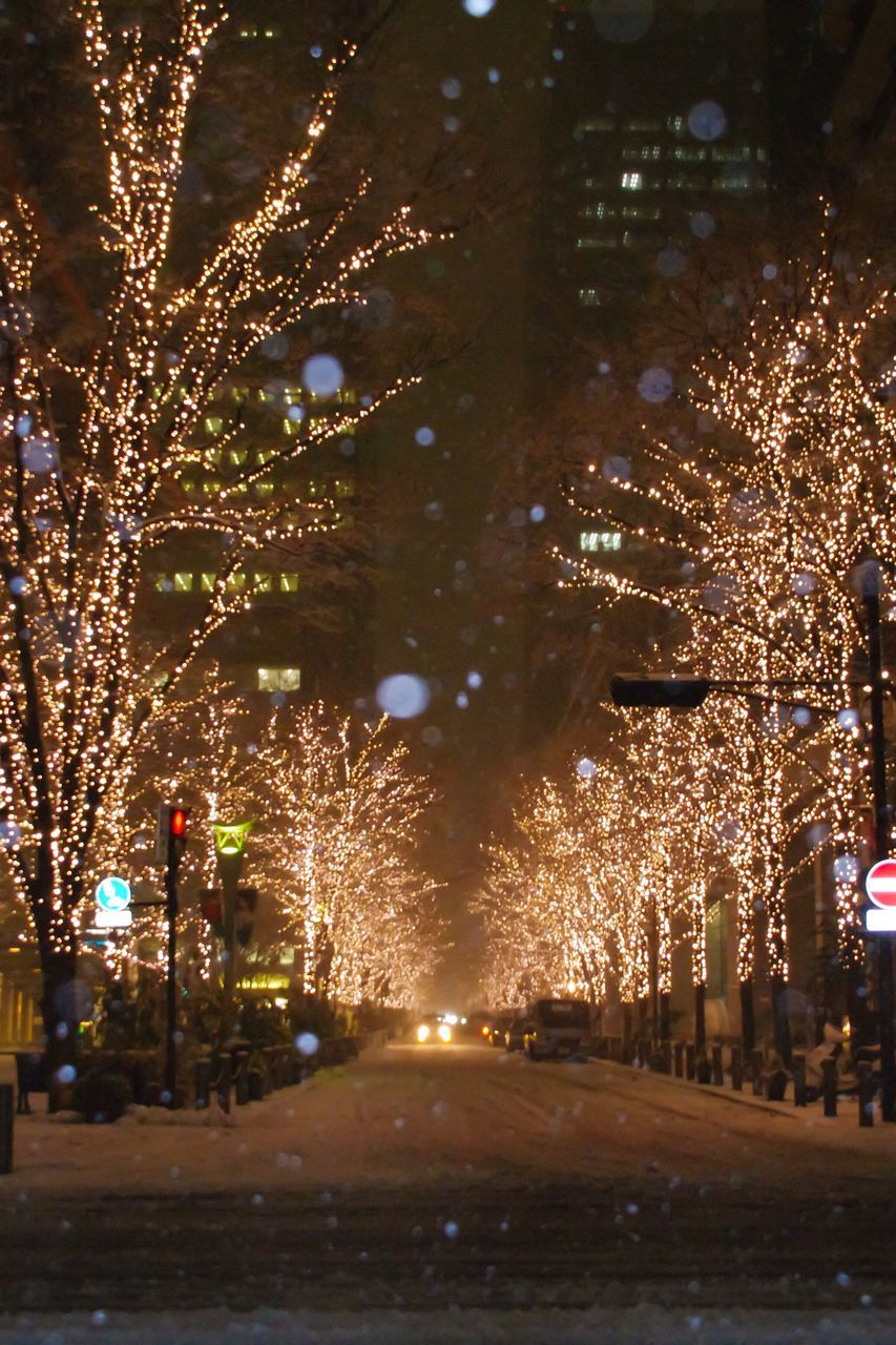 night, illuminated, celebration, tree, outdoors, firework display, no people, sky, city