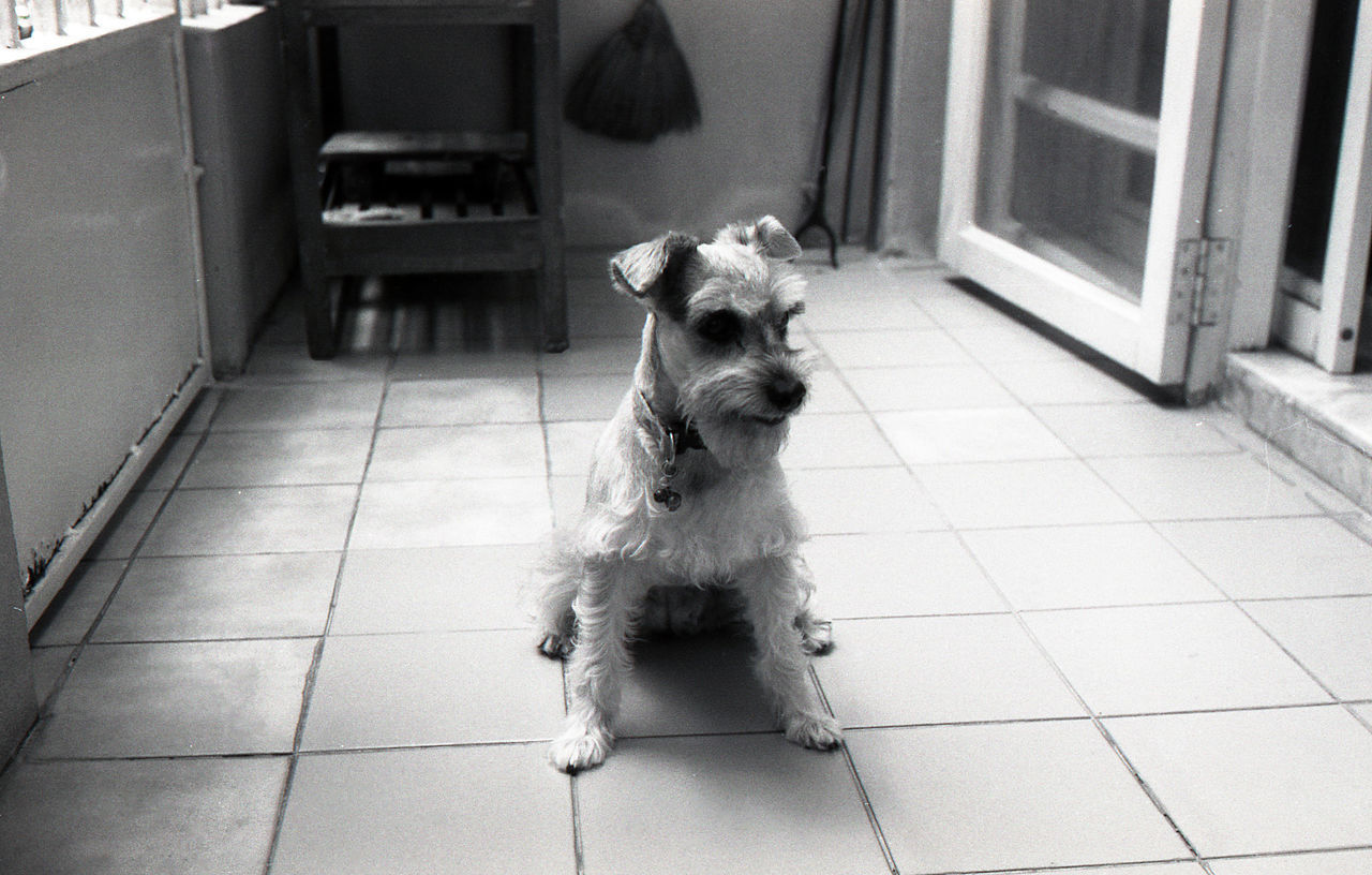 dog, pets, domestic animals, one animal, tiled floor, mammal, animal themes, indoors, no people, day, full length