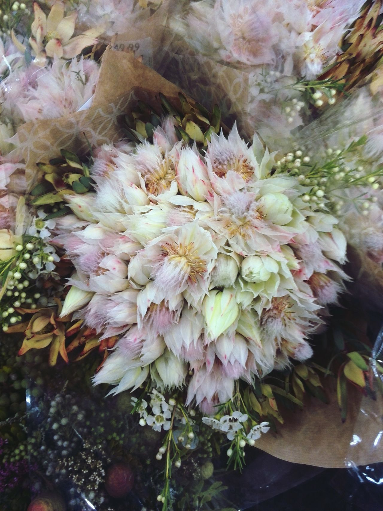 Blushing brides. Flora Southafricanflora Blushingbride Femininity Floral Soft Pastel Power