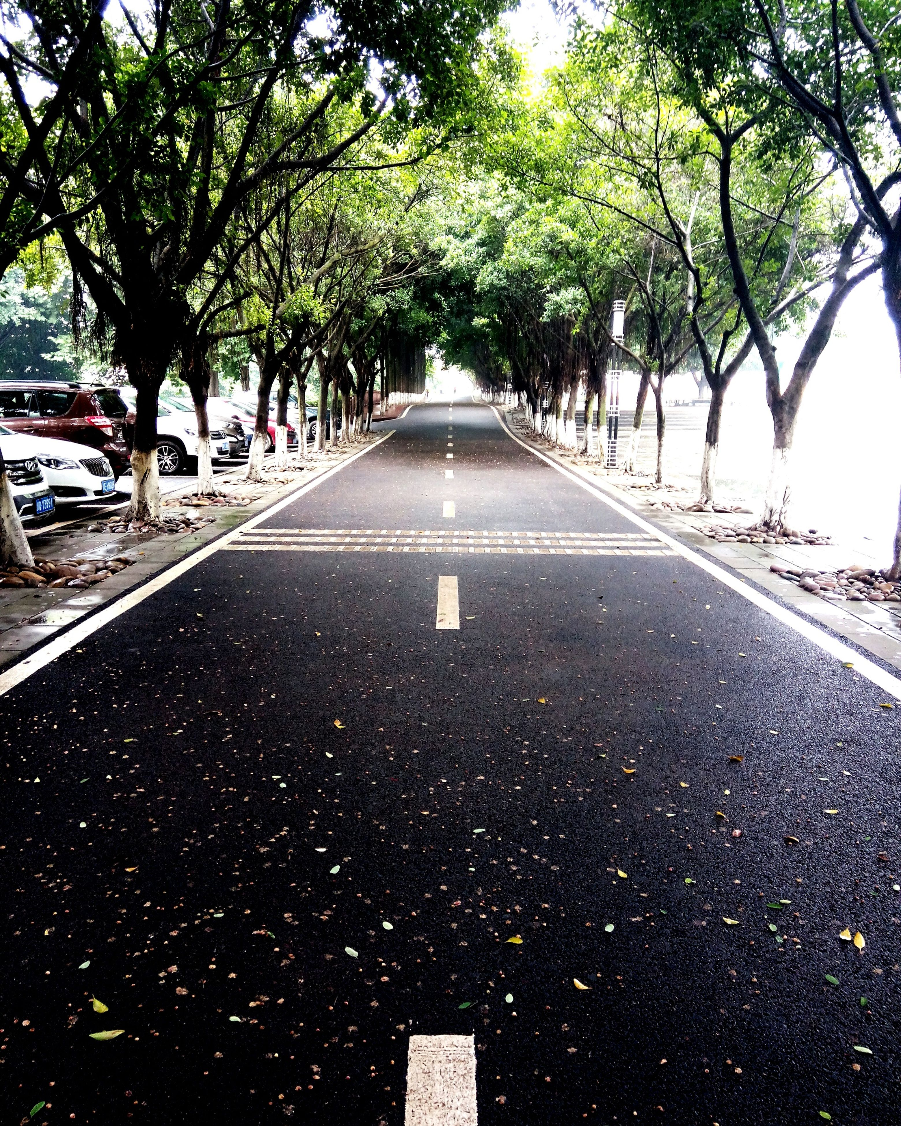 the way forward, transportation, tree, diminishing perspective, vanishing point, road, road marking, street, car, mode of transport, treelined, land vehicle, asphalt, empty, growth, day, outdoors, empty road, city, no people