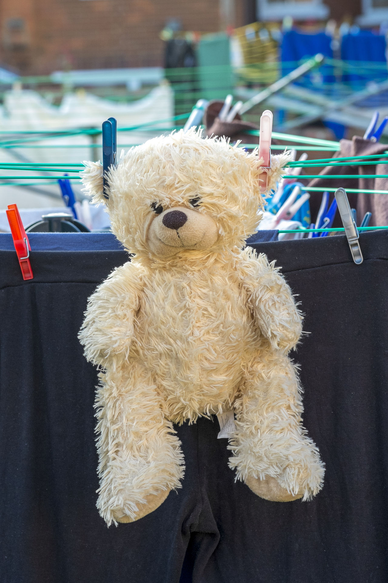Childs teddy bear drying on washing line Animal Representation Animal Themes Bear Childhood Childs Toy Clean Close-up Clothes Pegs Comfort Cuddly Toy Cuddly Toys Cute Drying Drying Clothes Fluffy Friend Happy Expression Keep Smiling Smiling Stuffed Toy Teddy Teddy Bear Toy Washed Washing Line
