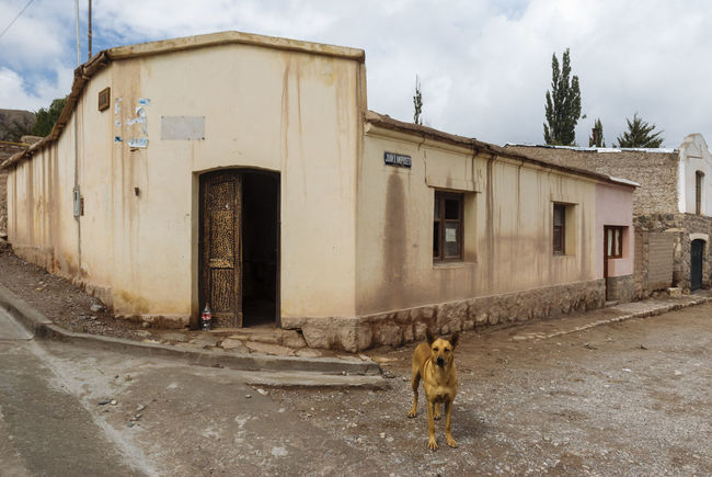 Andes Architecture Argentina Corner Dog Jujuy Province Mountains No People Street Tilcara, Jujuy. Tower Village