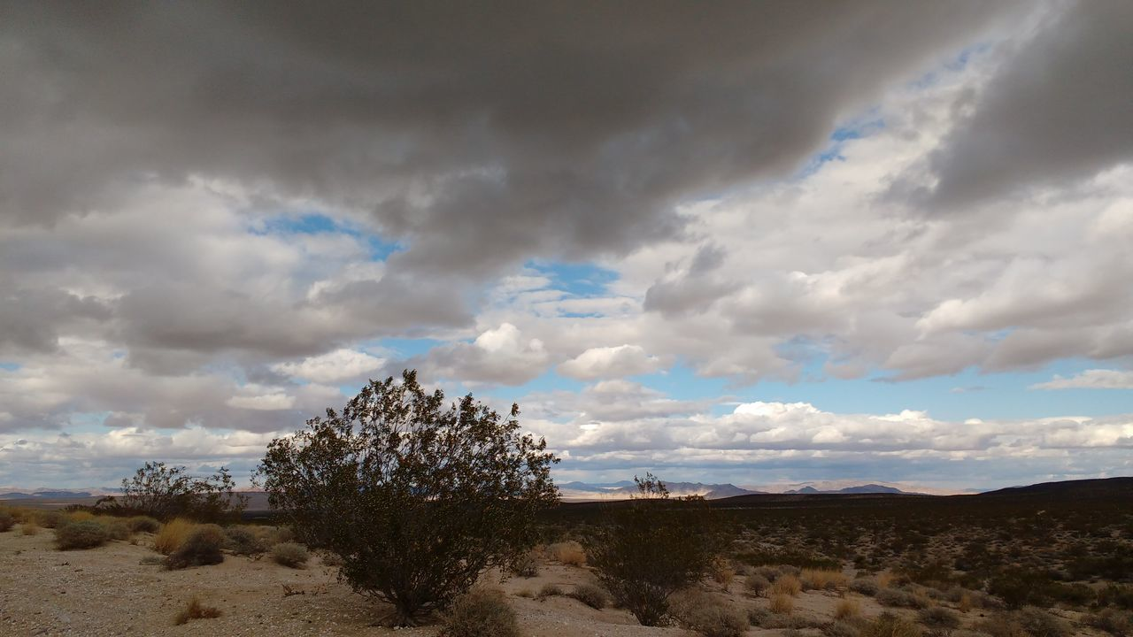Lucerne Valley Wild West Desert Sky Cloud Clouds California Mountain Mountains Rocky Dirt Road Shrubs Trees Dark Dark Sky Dark Clouds Rainy Cloudy Cactus Flower Plant Cactus Desert Around The World Desert Beauty Nature_collection Outdoor Photography