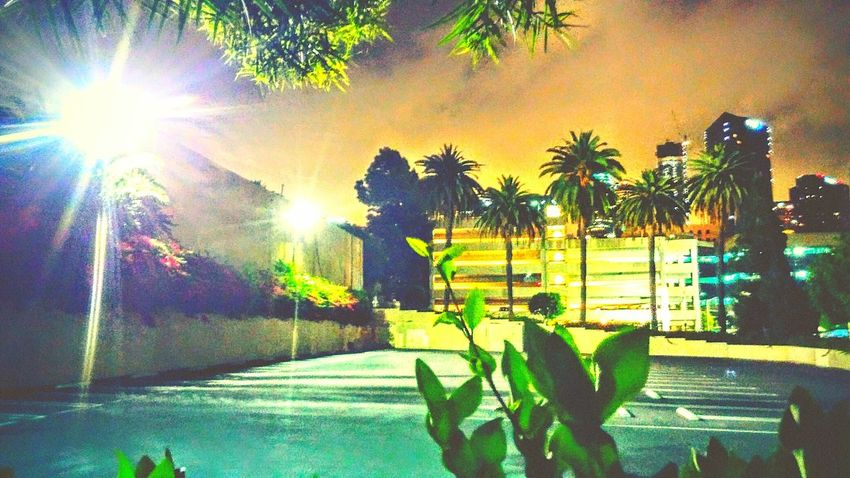 Reel L.A. American Beauty Goodnight Sleep Tight Los Angeles Skyline Night Crawler Insomnia Slangin Photos Night Photography