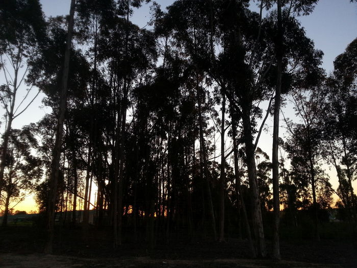 Tranquility Last Rays Of Sunlight Good Night Nature Lover Peaceful Outdoors Hope Sunset Sleeping In My Car Pulled Over To Rest Long Drive Ahead