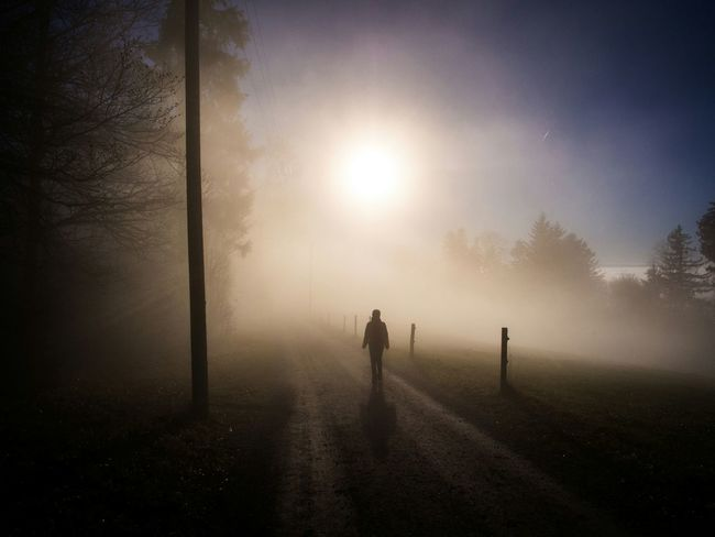 Showcase: December Light And Shadow Sunset_collection Sunlight Light Naturelovers EyeEm Nature Lover Enjoying The Sun Nature_collection Nature In The Forest Forest Foggy Day Fog Foggy Foggy Weather Mist Misty Eyem Misty Day Zurich, Switzerland Zürich Switzerland Schweiz My Best Photo 2015