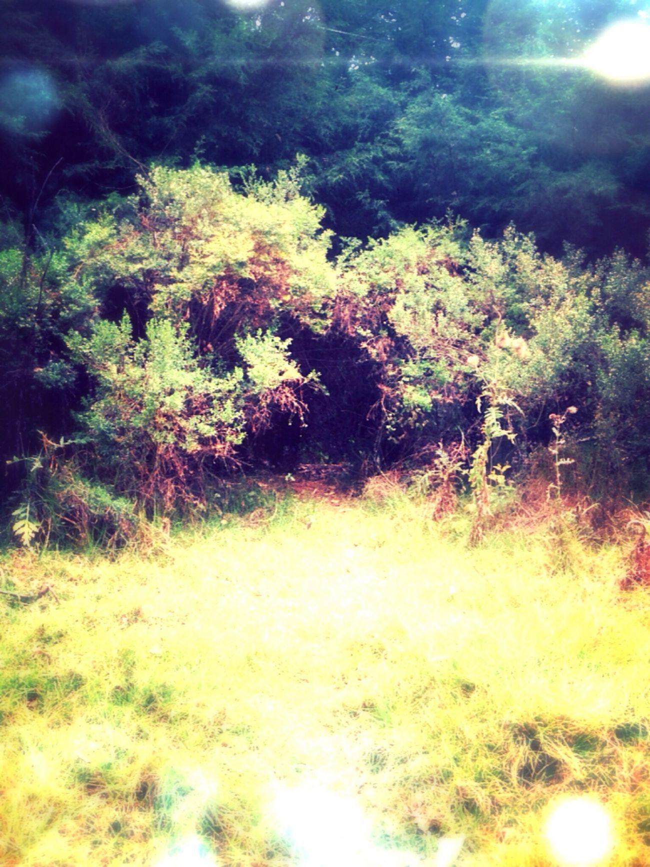 Relaxing Magic World Beautiful Nature Dream