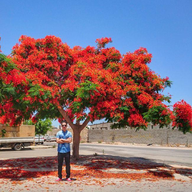 🌳🌲🍁🍂🌿🌞🌡 FireTree Tripoli Libya Abuslim WhenInLibya Summer