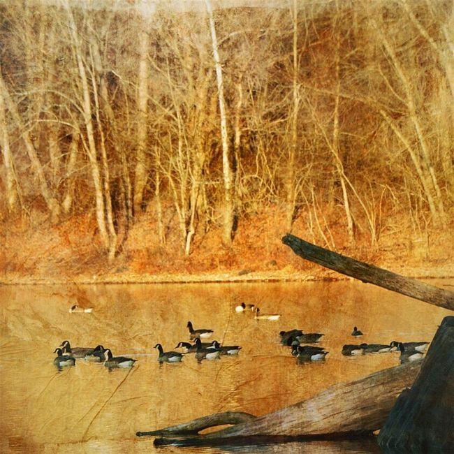 Birds Lake Nature Landscape_Collection Autumn Mextures Digital Painting Trees