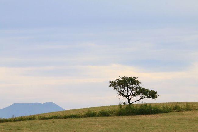 Dragon.51 山 草原 Mountain Grassland Yellowfield Landscape Scenery