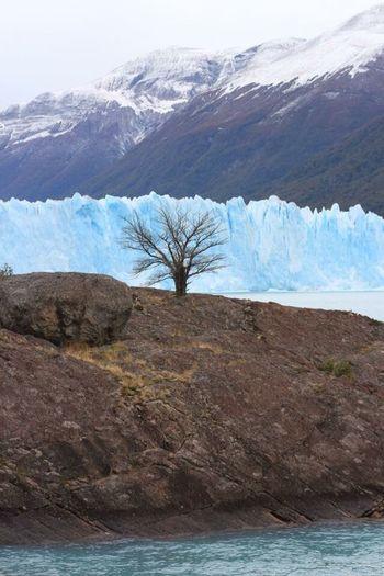 Perito Moreno Glacier, Pantegonia, Argentina Mountain Landscape Scenics Nature Glacier Tree Lonely Tree Pantagonia Argentina Ice
