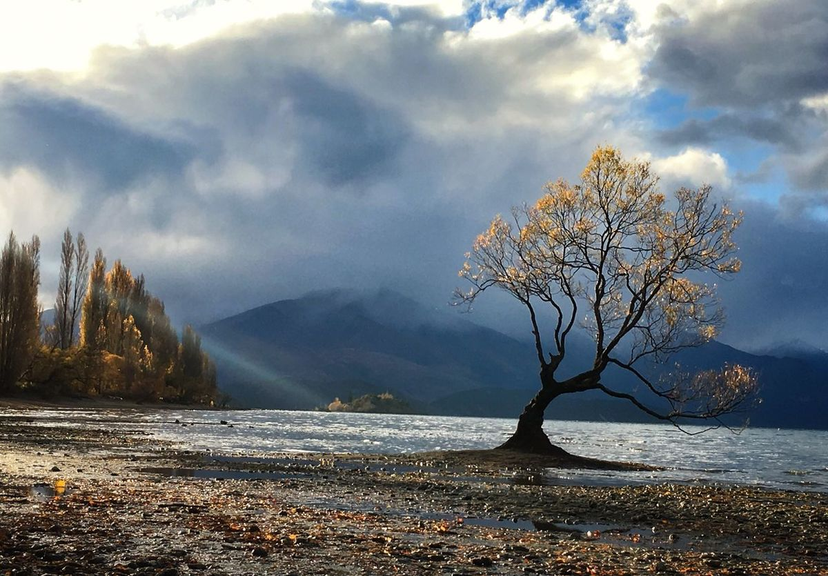 Tree Tranquility Beauty In Nature Scenics Nature Landscape Cloud - Sky Tranquil Scene Lake Wanaka Tree Wanakalake Wanaka New Zealand Wanaka New Zealand New Zealand Scenery New Zealand Landscape New Zealand Impressions Loneliness Lonely Sunset Alone Lake Wanaka The Great Outdoors - 2017 EyeEm Awards