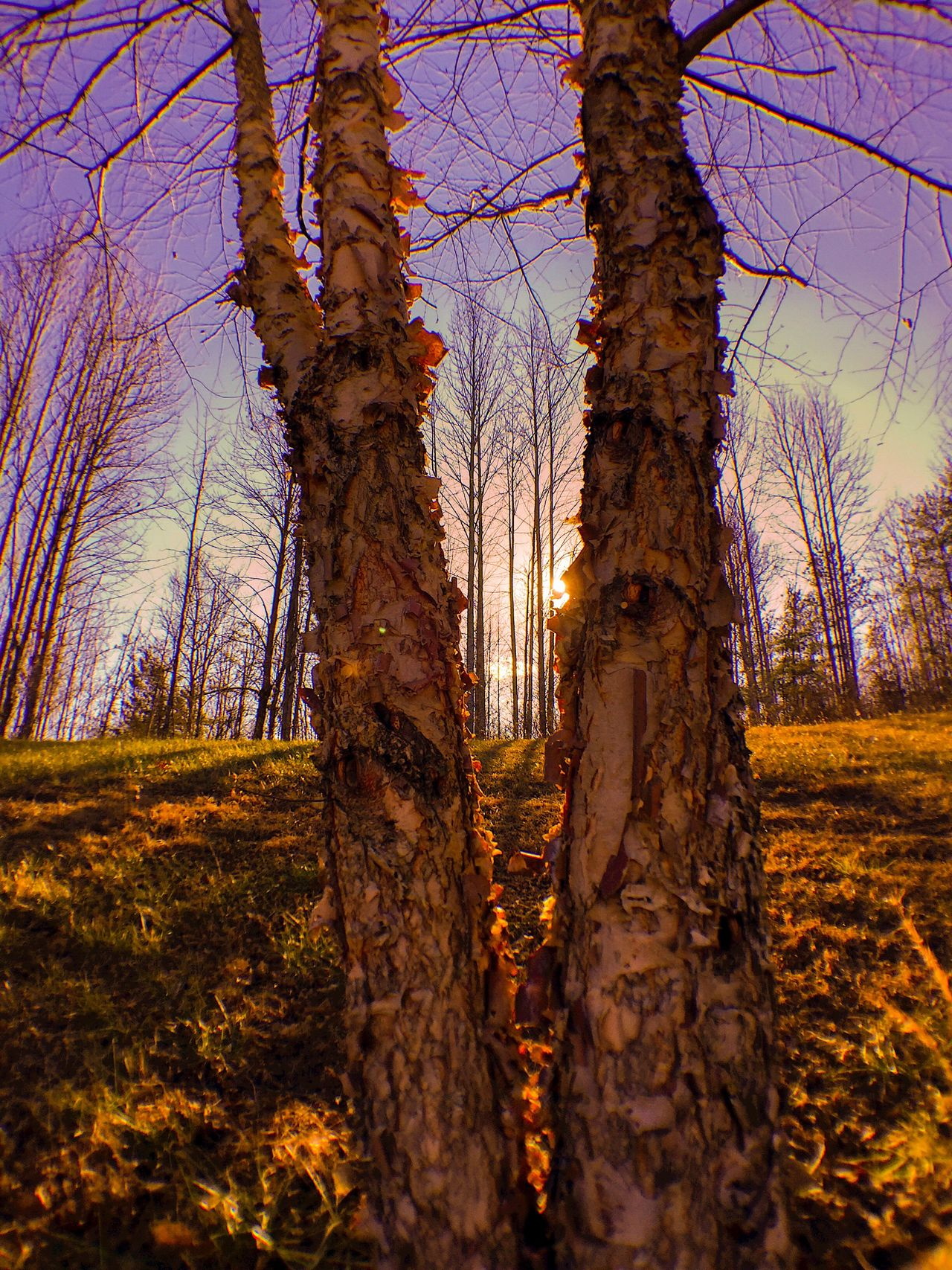 Nature Tree Beauty In Nature Outdoors Tranquil Scene Sky Growth No People Forest Tranquility Tree Trunk Still Life State Of Mind  From My Point Of View Still Life Photography