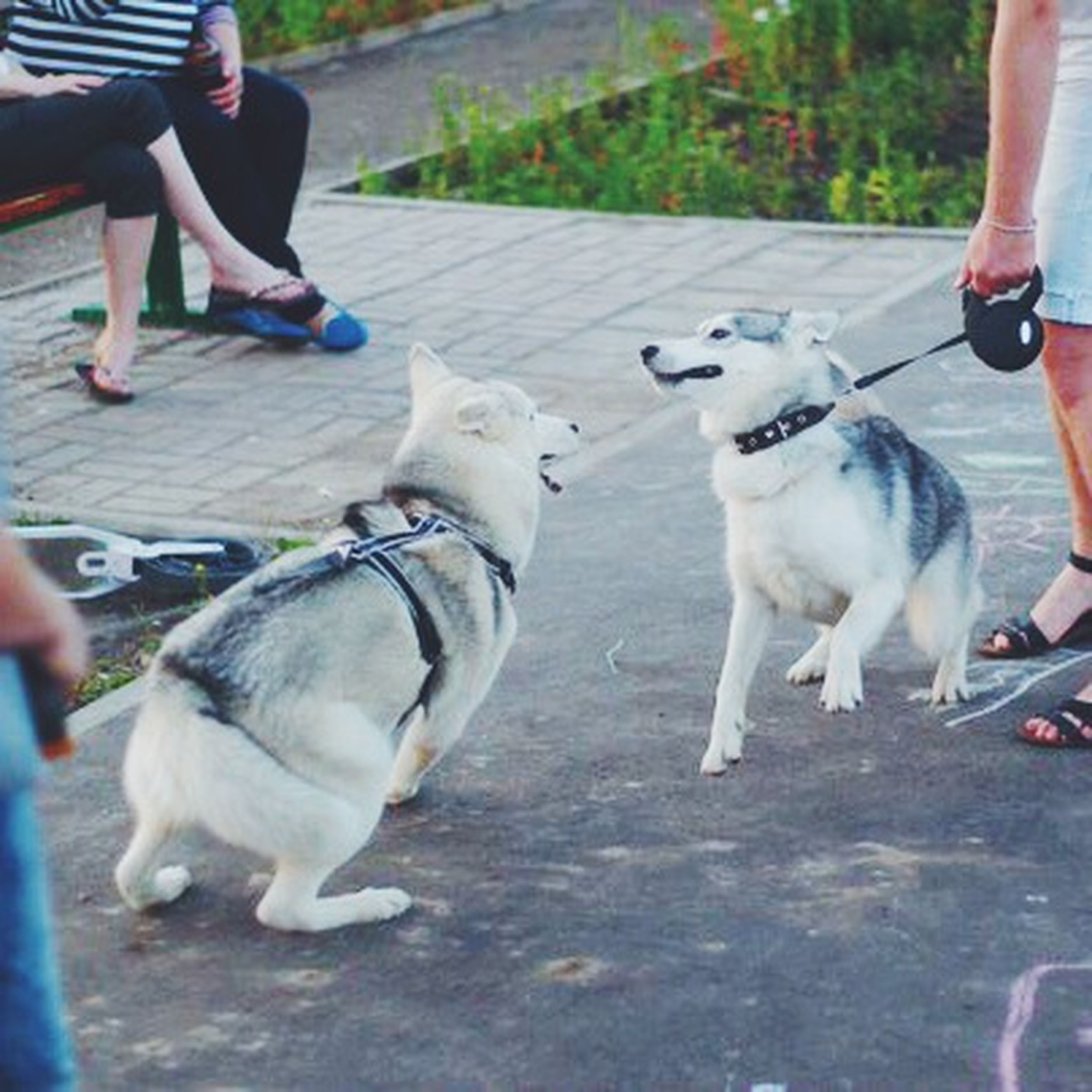 animal themes, domestic animals, mammal, pets, pet owner, one animal, lifestyles, men, low section, dog, leisure activity, togetherness, person, two animals, pet leash, holding