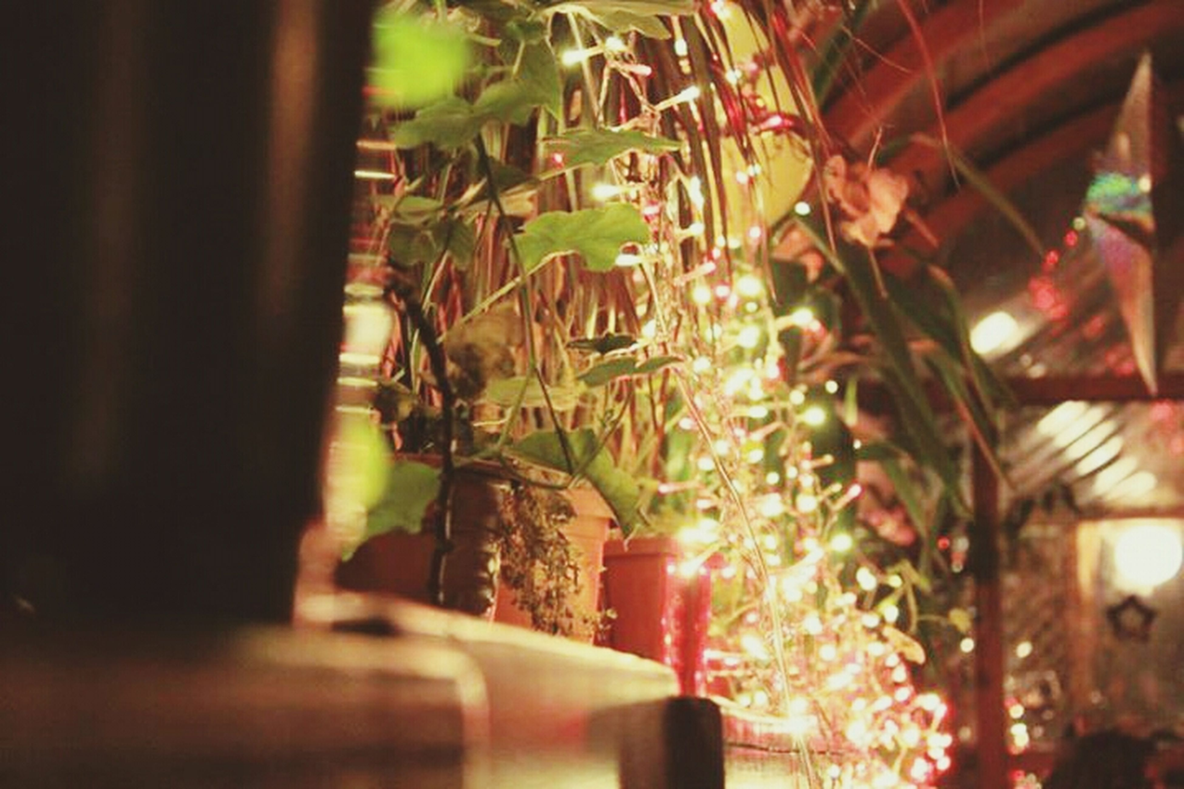 indoors, illuminated, decoration, hanging, selective focus, low angle view, growth, lighting equipment, close-up, tree, built structure, focus on foreground, plant, night, architecture, no people, potted plant, home interior, religion, branch