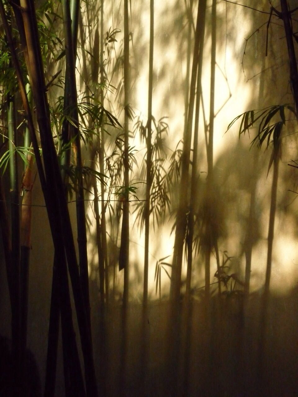 Shadow Of Plants