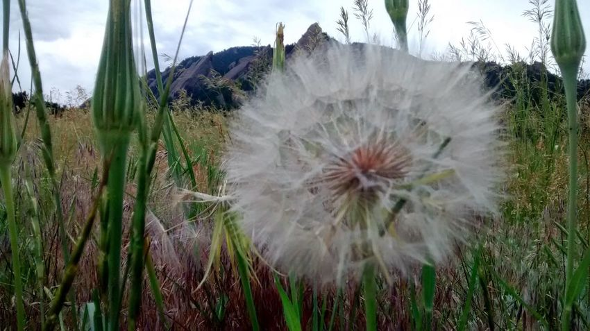 Wish Flower Flower Nature Taking Photos