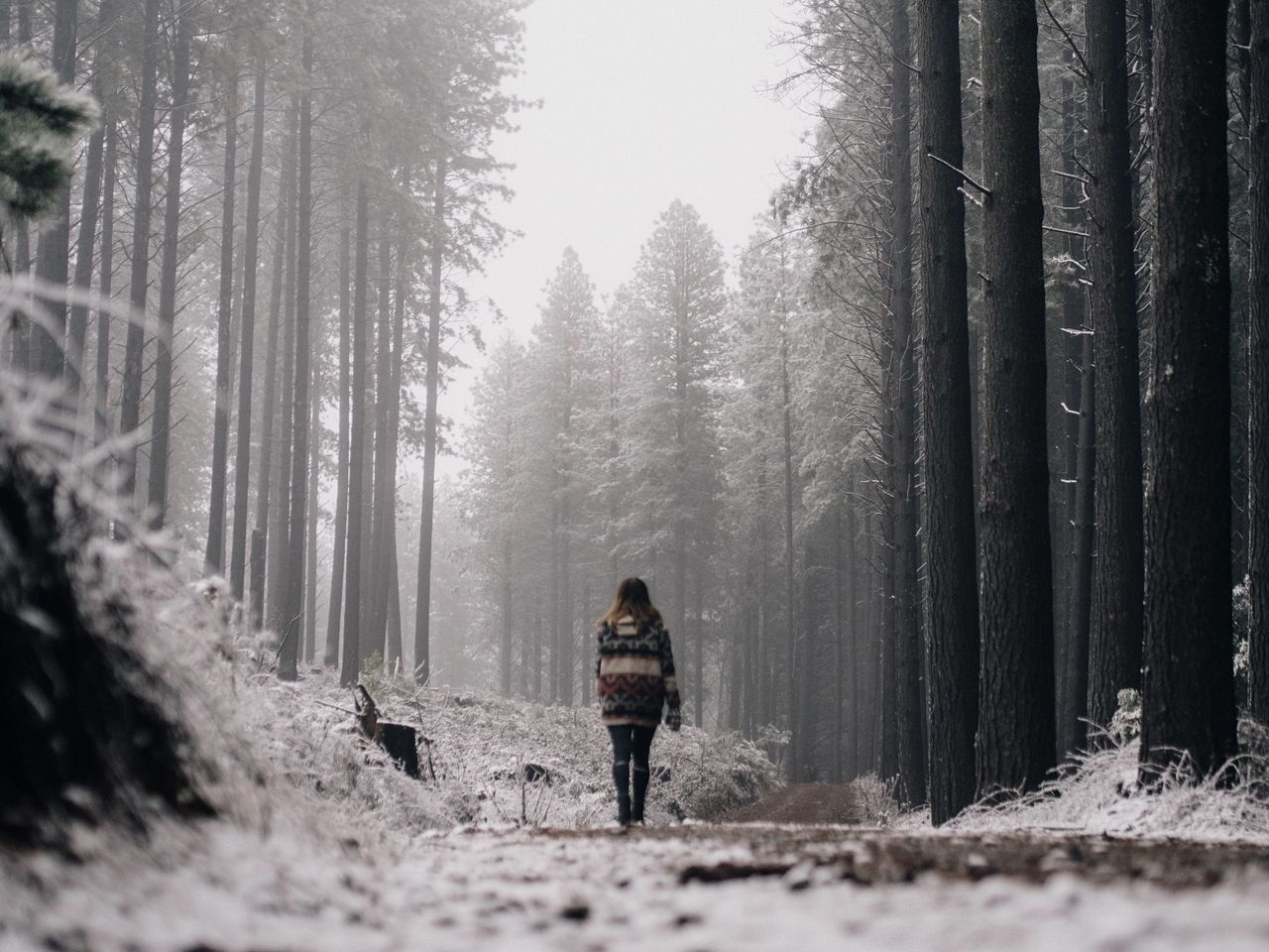 Beautiful stock photos of snow, Day, Forest, Full Length, Nature