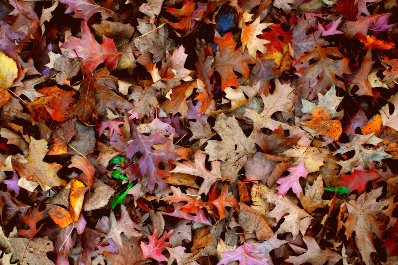 autumn, leaf, multi colored, abundance, backgrounds, full frame, change, variation, large group of objects, no people, close-up, day