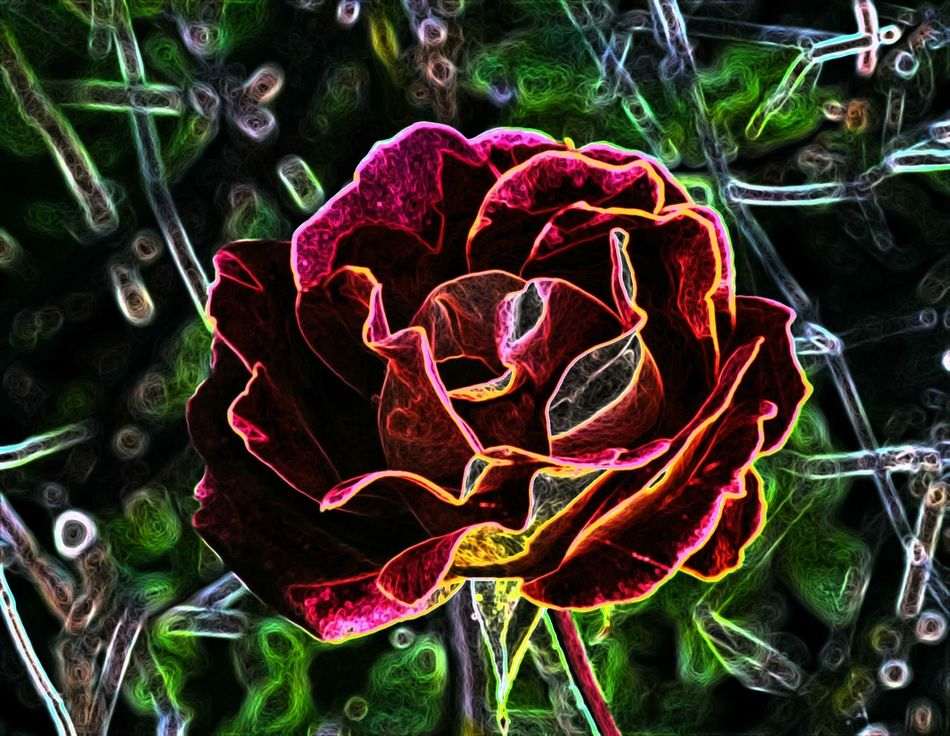 Distort Art Beauty In Nature Close-up Creative Flair CreativePhotographer Creativity Has No Limits Creativity Has No Rules Day Elzart Flower Freshness Getting Creative Getting Inspired Heart Shape High Angle View Indoors  Nature New Art Work!!! No People
