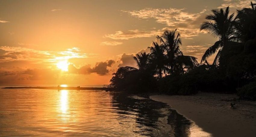 Sunset Water Sun Palm Tree Scenics Tranquil Scene Sea Tree Beach Tranquility Orange Color Beauty In Nature Sky Idyllic Reflection Shore Cloud Calm Nature Waterfront