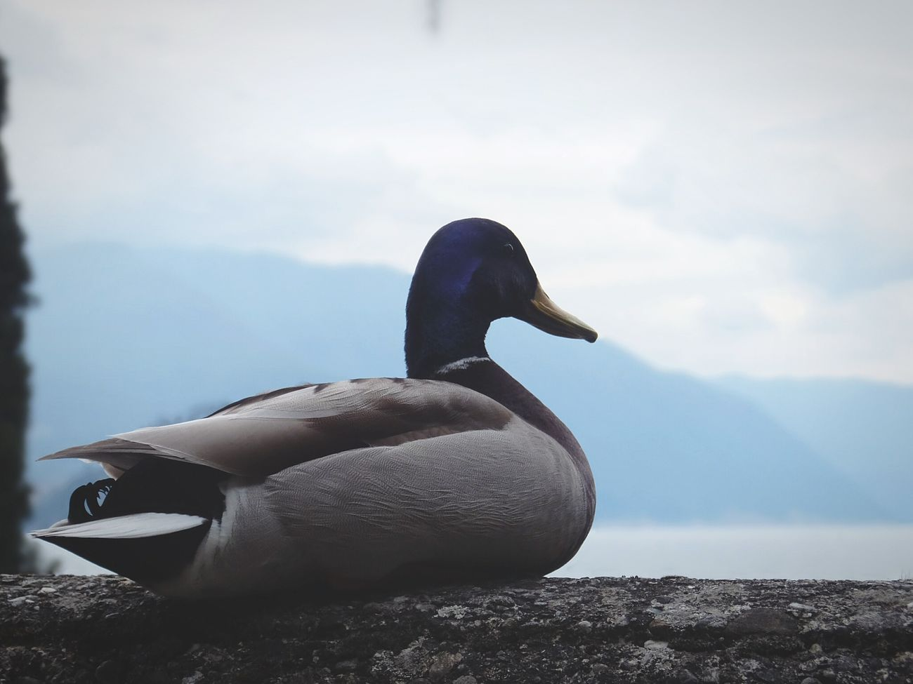 Old stuff Varenna Lago Di Como Lake Como Mountains Duck Backgrounddefocus Fujifilm
