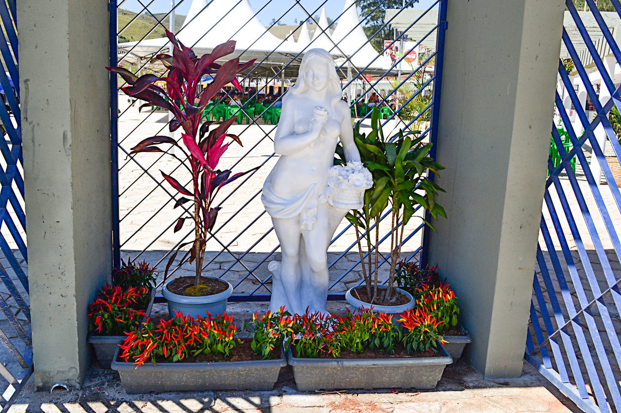 flower, growth, potted plant, day, plant, outdoors, statue, no people, nature, tree, architecture